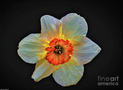 Photograph - Daffodil Spring by Mitch Shindelbower