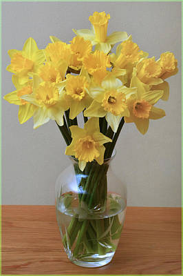 Daffodil Still Life. Original by Terence Davis