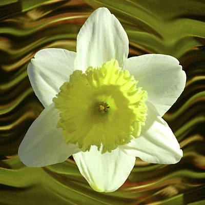 Daffodil Swirl Art Print