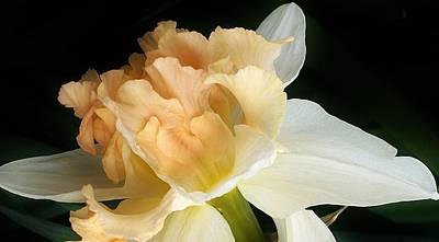 Photograph - Daffodil Up Close by Bruce Bley