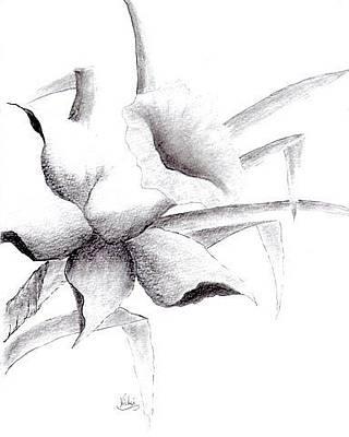 Drawing - Daffodil by Vicki Thompson