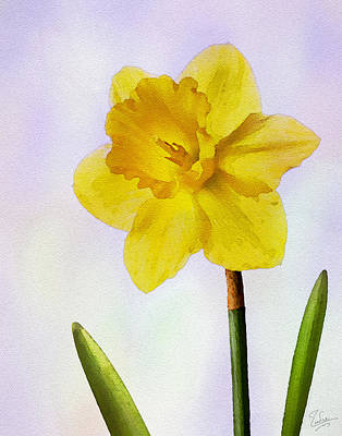 Photograph - Daffodil Faux Watercolor by Endre Balogh