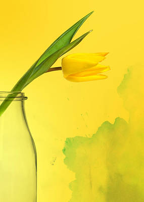 Daffodil Yellow Art Print by Mark Rogan