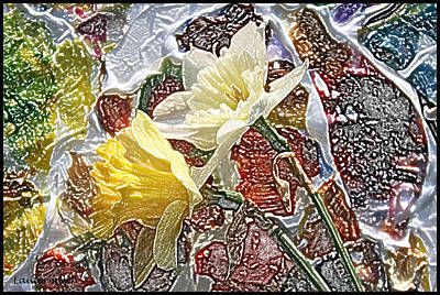 Photograph - Daffodils #1 by John Lautermilch
