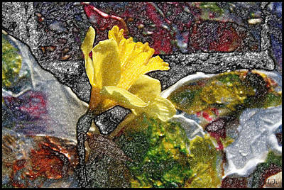 Photograph - Daffodils #2 by John Lautermilch