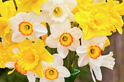 Photograph - Daffodils by Alan L Graham