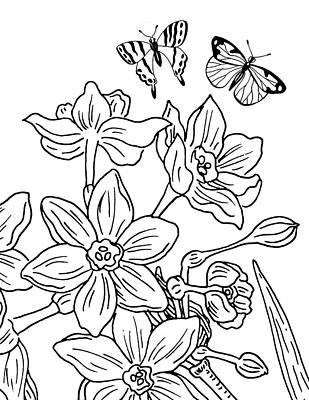 Drawing - Daffodils And Butterflies Drawing by Irina Sztukowski