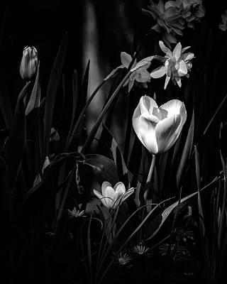 Daffodils And Tulips Art Print by Bob Orsillo