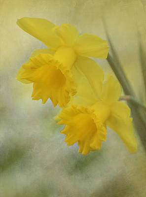 Photograph - Daffodils by Angie Vogel