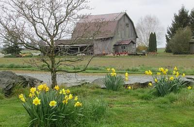 Photograph - Daffodils Bloom In Front Of A Barn by Karen Molenaar Terrell