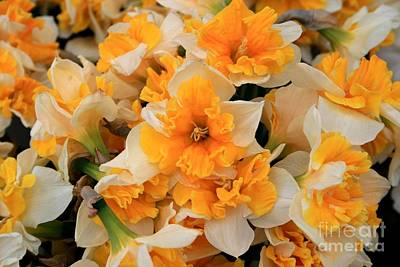 Daffodils Carpet Art Print by Valia Bradshaw