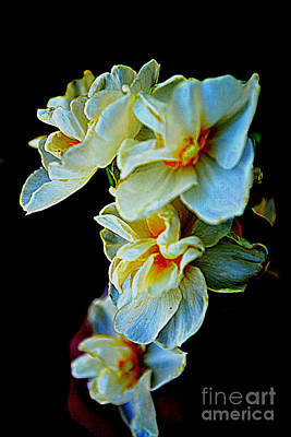Photograph - Daffodils by Diane montana Jansson
