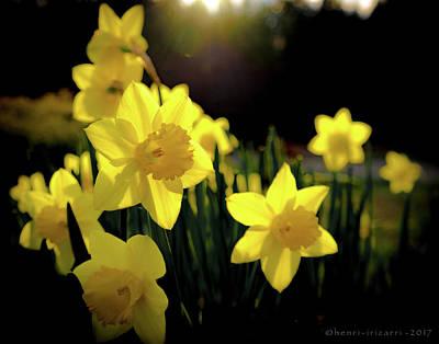 Photograph - Daffodils  by Henri Irizarri