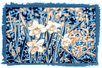 Photograph - Daffodils In Print by Rena Trepanier