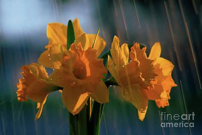 Daffodils In The Rain Print by Terril Heilman