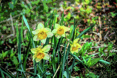 Photograph - Daffodils In The Woods by Rena Trepanier