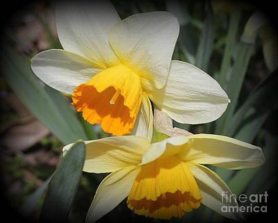 Photograph - Daffodils In White And Yellow by Dora Sofia Caputo Photographic Design and Fine Art