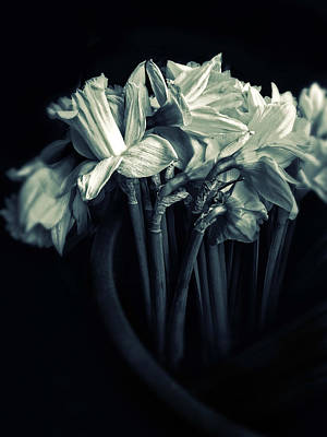 Duotone Photograph - Daffodils by Jessica Jenney