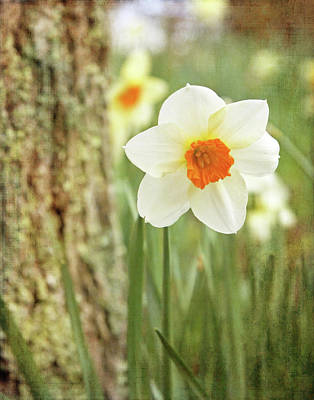 Photograph - Daffodils, No.1 by Brooke T Ryan