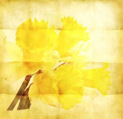 Daffodils Digital Art - Daffodils On Paper by Cathie Tyler