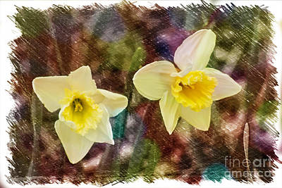 Photograph - Daffodils by Steven Parker