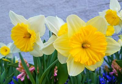 Photograph - Daffodils by Vijay Sharon Govender