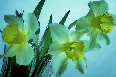 Photograph - Daffodils2 by Loni Collins