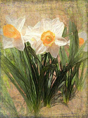 Photograph - Daffy Dames by Leslie Montgomery