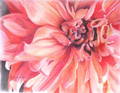 Art Print featuring the drawing Dahlia 1 by Phyllis Howard