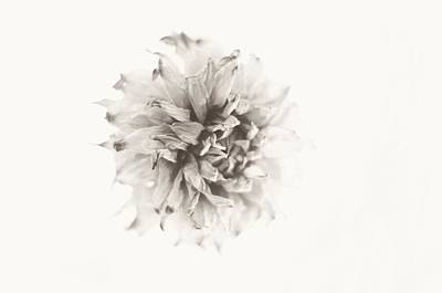Photograph - Dahlia 10 by Simone Ochrym
