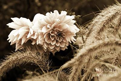 Photograph - Dahlia After A Shower by Marcia Lee Jones