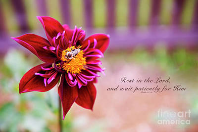Photograph - Dahlia And Bee With Verse by David Arment