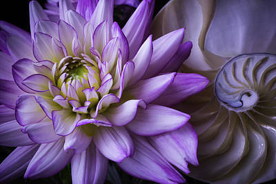 Dahlia And Nautilus Shell Print by Garry Gay