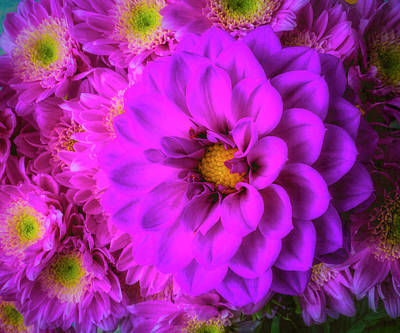 Photograph - Dahlia And Poms by Garry Gay