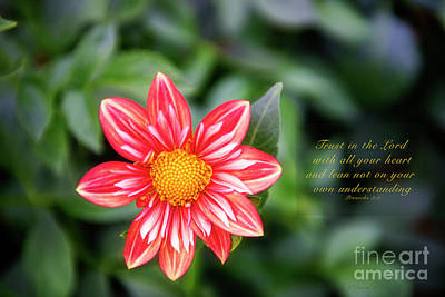 Photograph - Dahlia And Proverbs Verse by David Arment