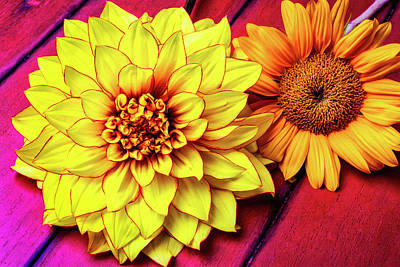 Red Sunflower Photograph - Dahlia And Sunflower by Garry Gay