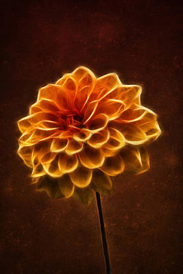 Photograph - Dahlia Art by Ian Mitchell