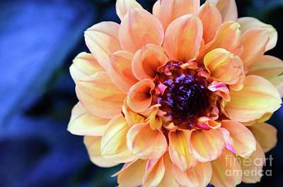 Photograph - Dahlia Beauty by Debby Pueschel