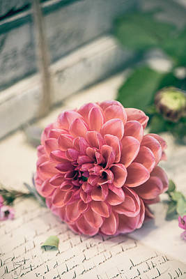Photograph - Dahlia Bloom by Teresa Wilson