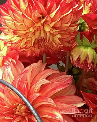 Photograph - Dahlia Bucket by Susan Garren