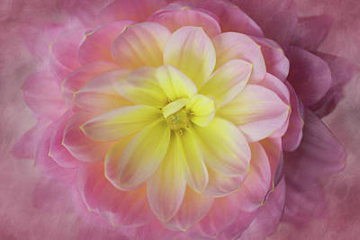 Photograph - Dahlia Cloud by Mary Jo Allen