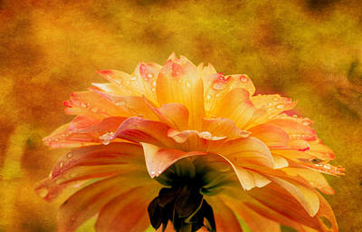 Photograph - Dahlia Cloudburst by Mary Jo Allen