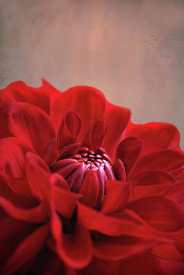 Photograph - Dahlia Dalliance  by Marion Cullen