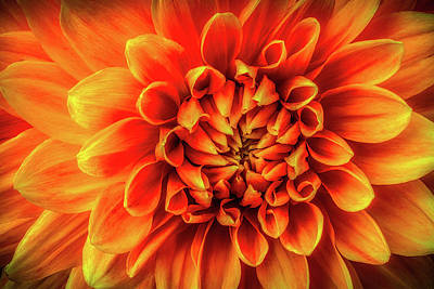 Photograph - Dahlia Detail by Garry Gay