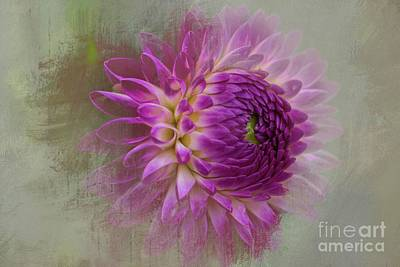 Dahlia Dream Art Print