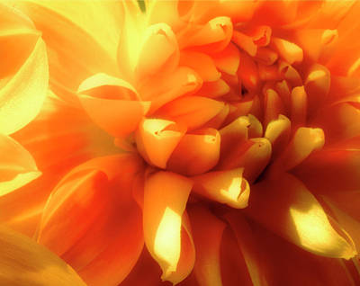 Photograph - Dahlia Dream by Gary Shepard