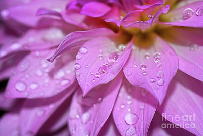 Photograph - Dahlia Droplets By Kaye Menner by Kaye Menner