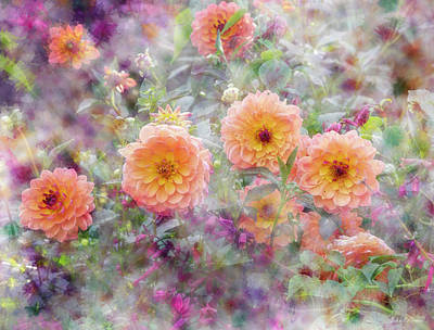 Photograph - Dahlia Field by John Rivera