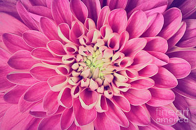 Anniversary Photograph - Dahlia Flower Petals Pattern Close-up by Michal Bednarek