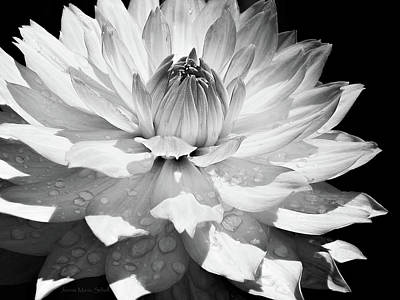 Photograph - Dahlia Flower Raindrops Monochrome by Jennie Marie Schell